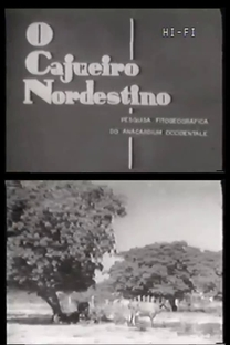O Cajueiro Nordestino - Poster / Capa / Cartaz - Oficial 1