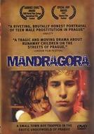 Mandrágora (Mandragora)