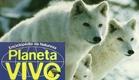 Planeta Vivo - Grande Norte: O País do Lobo Branco