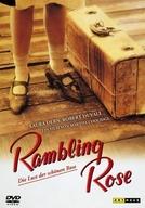 As Noites de Rose (Rambling Rose)