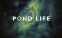 Doctor Who – Pond Life - Poster / Capa / Cartaz - Oficial 2