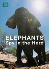 Elephants - Spy in The Herd - Poster / Capa / Cartaz - Oficial 1