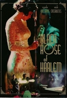 A Rosa Negra do Harlen (Black Rose of Harlem)