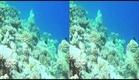 Amazing Ocean in 3D 1080 HD (movie trailer).avi