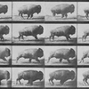 Buffalo Running (1883) - Crítica