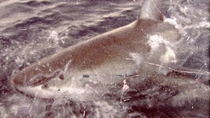 Submarine – O Tubarão das Trevas - Poster / Capa / Cartaz - Oficial 2