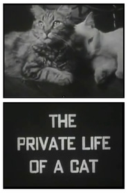 The Private Life of a Cat - Poster / Capa / Cartaz - Oficial 1