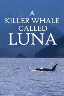 Uma Orca chamada Luna - Poster / Capa / Cartaz - Oficial 1