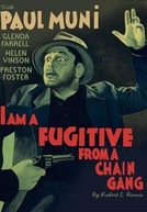 O Fugitivo (I am a Fugitive from a Chain Gang)