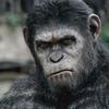 Cinema: Planeta dos Macacos - O Confronto
