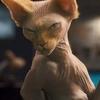 Crítica- Como Cães e Gatos 2 - A vingança de Kitty Galore