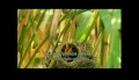 A Vida da Plantas - Documentário dublado