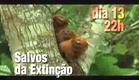 Salvos da Extinção estreia no dia 13 de novembro