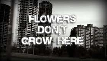 Flowers Don't Grow Here - Poster / Capa / Cartaz - Oficial 1