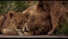 The Last Lions (2011) - Official Trailer [HD]