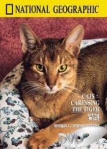 Gatos – Acariciando o Tigre - Poster / Capa / Cartaz - Oficial 1