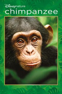 Chimpanzé - Poster / Capa / Cartaz - Oficial 3