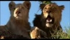 white lion (official movie trailer)
