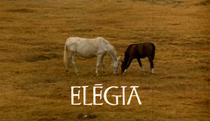 Elégia - Poster / Capa / Cartaz - Oficial 1