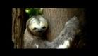 Brasil Animado (2010) Trailer Oficial.