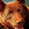 Gʀѳѳѵy (The Red Dog)
