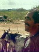 O Boi Misterioso e o Menino Vaqueiro (O Boi Misterioso e o Menino Vaqueiro)