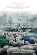 Sweetgrass (Sweetgrass)
