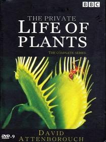 A Vida Privada Das Plantas - Poster / Capa / Cartaz - Oficial 2