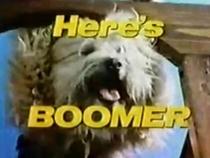 Boomer (1ª Temporada) - Poster / Capa / Cartaz - Oficial 1