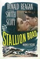Stallion Road  (Stallion Road)