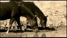 Trailer Oficial Cuates de Australia / Everardo González