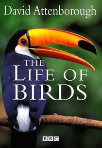 BBC - A Vida dos Pássaros - Poster / Capa / Cartaz - Oficial 1