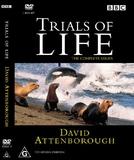 Os Desafios da Vida (The Trials of Life)