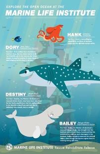 Marine Life Interviews - Poster / Capa / Cartaz - Oficial 1