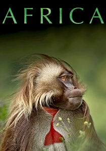 Africa - Poster / Capa / Cartaz - Oficial 2