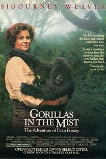 Nas Montanhas dos Gorilas - Poster / Capa / Cartaz - Oficial 5
