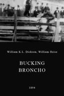 Bucking Broncho (Bucking Broncho)