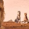 Ilha dos cachorros | A riqueza dos detalhes de Wes Anderson | Zinema