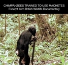 Planeta dos Macacos - A Origem - Chimpanzees Trained To Use Machetes (Rise of The Planet of The Apes - Chimpanzees Trained To Use Machetes)