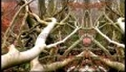 Metanoia: A New Vision of Nature (a film about life, evolution and intelligence)