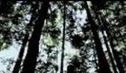 CROWSNEST - Movie Trailer 2012