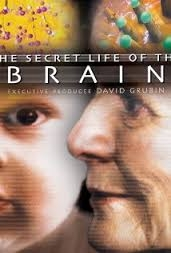 The Secret Life of the Brain - Poster / Capa / Cartaz - Oficial 1