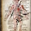 Esfinges e minotauros: Wound Man, o Homem Ferido