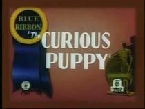 The Curious Puppy  - Poster / Capa / Cartaz - Oficial 1