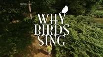 Por que os Pássaros Cantam? - Poster / Capa / Cartaz - Oficial 1
