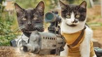 Gatos vs Zumbis - Poster / Capa / Cartaz - Oficial 1