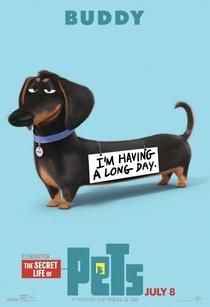 Pets: A Vida Secreta dos Bichos - Poster / Capa / Cartaz - Oficial 7