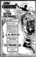Flor de Amor (The Love Flower)