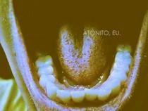Atônito, Eu. - Poster / Capa / Cartaz - Oficial 1