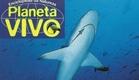 Planeta Vivo - Encontro com Tubarões